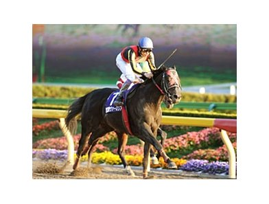 Vermilion winning the Japan Dirt Cup (JPN-I).