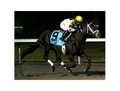 Mr. Prankster won the Turfway Prevue on Jan. 7.