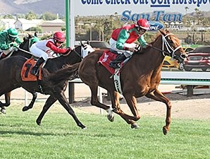 Red Zeus wins the 2013 Jack Coady, Sr. & Jeff Coady Stakes.