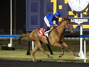 African Story wins the 2013 Burj Nahaar.