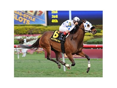 "Teaks North will try a synthetic surface for the first time in the Berkeley Handicap.<br><a target=""blank"" href=""http://photos.bloodhorse.com/AtTheRaces-1/at-the-races-2013/27257665_QgCqdh#!i=2326918543&k=Mp57Lnf"">Order This Photo</a>"