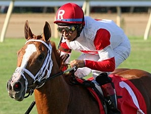 Thank You Marylou wins the 2013 Tippett Stakes.