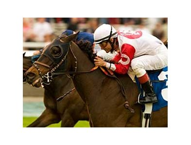 "Spring House overtook Zambesi Sun to win the San Luis Obispo. <br><a target=""blank"" href=""http://www.bloodhorse.com/horse-racing/photo-store?ref=http%3A%2F%2Fgallery.pictopia.com%2Fbloodhorse%2Fgallery%2F69713%2Fphoto%2F7794556%2F%3Fo%3D0"">Order This Photo</a>"