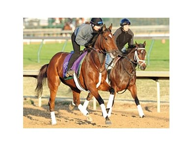 "Proviso seems to be reaching her peak heading into the Breeders' Cup Mile. <br><a target=""blank"" href=""http://www.bloodhorse.com/horse-racing/photo-store?ref=http%3A%2F%2Fpictopia.com%2Fperl%2Fgal%3Fprovider_id%3D368%26ptp_photo_id%3D9265431%26ref%3Dstory"">Order This Photo</a>"
