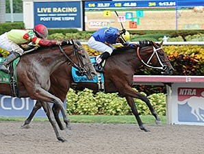 Holywell wins the 2014 Florida Sire Susan's Girl Stakes.