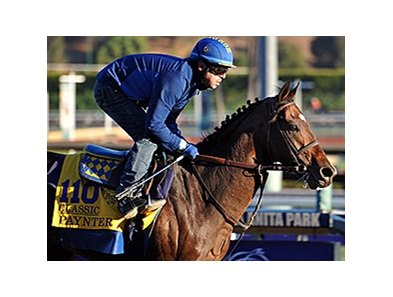 "Paynter, the 2012 Vox Populi winner, is a 2013 nominee for the award.<br><a target=""blank"" href=""http://photos.bloodhorse.com/BreedersCup/2013-Breeders-Cup/Breeders-Cup/32986083_QMHXWK#!i=2874376312&k=9jzvtLH"">Order This Photo</a>"