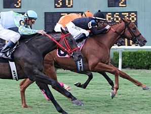 Little Ms Protocol wins the 2011 Princess Stakes.