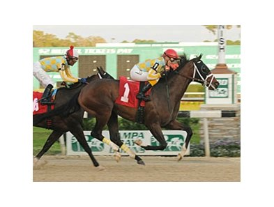 Dynamic Sky won the Pasco Stakes at Tampa Bay on January 12.