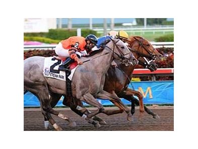 "Gemswick Park (center) wins a three-way photo in the Jan. 4 Old Hat at Gulfstream Park. <br><a target=""blank"" href=""http://www.bloodhorse.com/horse-racing/photo-store?ref=http%3A%2F%2Fpictopia.com%2Fperl%2Fgal%3Fprovider_id%3D368%26ptp_photo_id%3D7311174%0D%0A%26ref%3Dstory"">Order This Photo</a>"