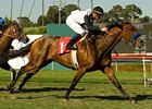 Black Mamba won the Beverly Hills Handicap (gr. IIT) during the Hollywood spring/summer meet.