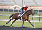 Animal Kingdom Draws Post 12 in World Cup