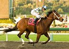 "Santa Teresita won the Santa Maria (gr. I) in her 2009 debut. <br><a target=""blank"" href=""http://www.bloodhorse.com/horse-racing/photo-store?ref=http%3A%2F%2Fgallery.pictopia.com%2Fbloodhorse%2Fgallery%2FS642482%2Fphoto%2F7752599%2F%3Fo%3D0"">Order This Photo</a>"