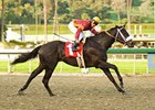 "San Vicente winner Georgie Boy tries two turns in the San Felipe.<br><a target=""blank"" href=""http://www.bloodhorse.com/horse-racing/photo-store?ref=http%3A%2F%2Fpictopia.com%2Fperl%2Fgal%3Fprovider_id%3D368%26ptp_photo_id%3D3542416%26ref%3Dstory"">Order This Photo</a>"