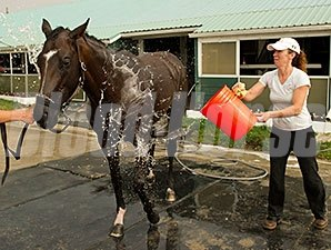 Tower of Texas gets a bath at Woodbine, June 30, 2014.