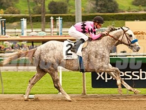 Flashback wins the 2013 Robert B. Lewis Stakes.