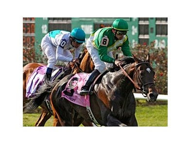"Proudinsky won the 2008 running of the Muniz Memorial Handicap. <br><a target=""blank"" href=""http://www.bloodhorse.com/horse-racing/photo-store?ref=http%3A%2F%2Fgallery.pictopia.com%2Fbloodhorse%2Fgallery%2FS667162%2Fphoto%2F3811566%2F%3Fo%3D6"">Order This Photo</a>"