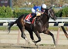 Calibrachoa wins the 2011 Bold Ruler Stakes.