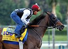 "Game On Dude <br><a target=""blank"" href=""http://photos.bloodhorse.com/BreedersCup/2013-Breeders-Cup/Breeders-Cup/32986083_QMHXWK#!i=2867173187&k=rc8zLGb"">Order This Photo</a>"