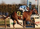 "Haynesfield was one of two stakes winners for Speightstown the weekend of Jan. 3-4.<br><a target=""blank"" href=""http://www.bloodhorse.com/horse-racing/photo-store?ref=http%3A%2F%2Fpictopia.com%2Fperl%2Fgal%3Fprovider_id%3D368%26ptp_photo_id%3D7300630%26ref%3Dstory"">Order This Photo</a>"