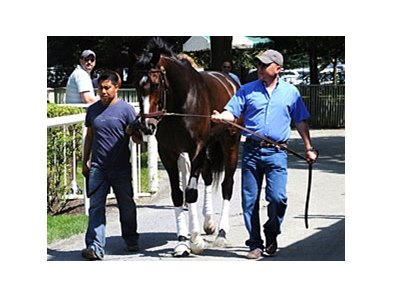 "Rachel Alexandra schooling at Belmont Park.<br><a target=""blank"" href=""http://www.bloodhorse.com/horse-racing/photo-store?ref=http%3A%2F%2Fpictopia.com%2Fperl%2Fgal%3Fprovider_id%3D368%26ptp_photo_id%3D8274353%26ref%3Dstory"">Order This Photo</a>"