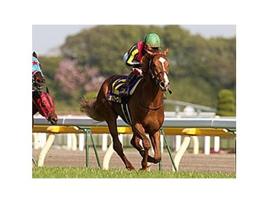 2011 Japanese Horse of the Year Orfevre