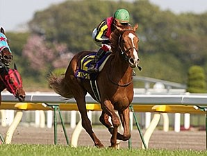 Orfevre wins the Two Thousand Guineas in Japan.