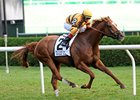 "Wise Dan won the 2012 Fourstardave by five lengths.<br><a target=""blank"" href=""http://photos.bloodhorse.com/AtTheRaces-1/at-the-races-2012/22274956_jFd5jM#!i=2019756150&k=kkzNLdn"">Order This Photo</a>"
