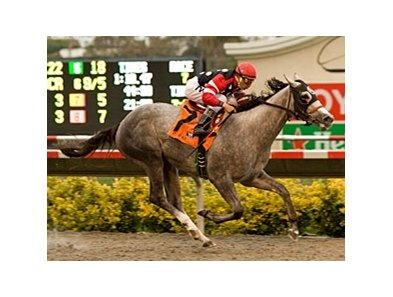 "Undefeated Wickedly Perfect is the likely favorite in the Debutante Stakes.<br><a target=""blank"" href=""http://www.bloodhorse.com/horse-racing/photo-store?ref=http%3A%2F%2Fpictopia.com%2Fperl%2Fgal%3Fprovider_id%3D368%26ptp_photo_id%3D9133131%26ref%3Dstory"">Order This Photo</a>"