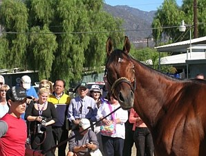 Little Mike at Santa Anita 10/28/2012.