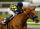 "Grade I winner Misremembered takes on 5 in the Oaklawn Handicap.<br><a target=""blank"" href=""http://www.bloodhorse.com/horse-racing/photo-store?ref=http%3A%2F%2Fpictopia.com%2Fperl%2Fgal%3Fprovider_id%3D368%26ptp_photo_id%3D8830331%26ref%3Dstory"">Order This Photo</a>"