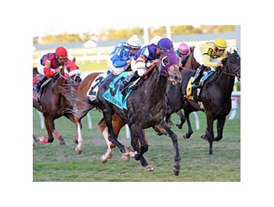 "Mucho Mas Macho gets up late to win the Ft. Lauderdale Stakes.<br><a target=""blank"" href=""http://photos.bloodhorse.com/AtTheRaces-1/at-the-races-2013/27257665_QgCqdh#!i=2316710333&k=vWsLFsf"">Order This Photo</a>"
