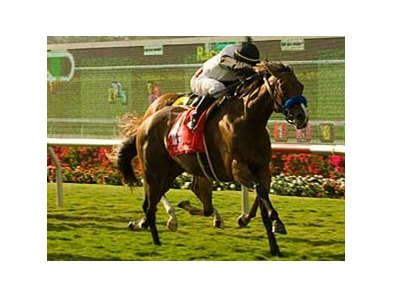 "Black Mamba<br><a target=""blank"" href=""http://www.bloodhorse.com/horse-racing/photo-store?ref=http%3A%2F%2Fpictopia.com%2Fperl%2Fgal%3Fprovider_id%3D368%26ptp_photo_id%3D5382569%26ref%3Dstory"">Order This Photo</a>"