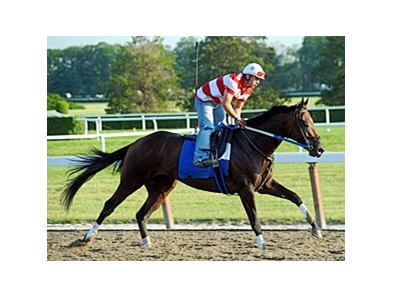 "Nehro<br><a target=""blank"" href=""http://www.bloodhorse.com/horse-racing/photo-store?ref=http%3A%2F%2Fpictopia.com%2Fperl%2Fgal%3Fprovider_id%3D368%26ptp_photo_id%3D9553235%26ref%3Dstory"">Order This Photo</a>"