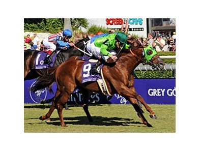 "2008 Breeders' Cup Turf Sprint winner Desert Code<br><a target=""blank"" href=""http://www.bloodhorse.com/horse-racing/photo-store?ref=http%3A%2F%2Fpictopia.com%2Fperl%2Fgal%3Fprovider_id%3D368%26ptp_photo_id%3D6456198%26ref%3Dstory"">Order This Photo</a>"