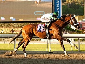 Awesome Again: Mucho Macho Man Flexes Muscles