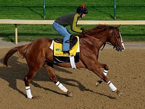 Shackleford's Preakness Puts Forestry Back On