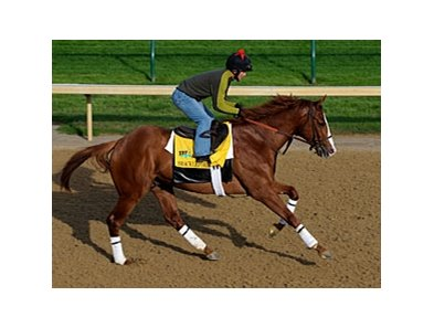 Shackleford