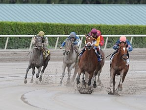 Golden Mystery wins the 2013 Florida Sunshine Millions Filly and Mare Sprint.