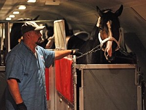Flight Carrying BC Horses Able to Leave NY