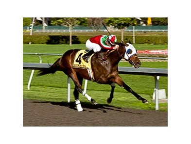 Zeewat won the Gold Rush Stakes on December 8 at Golden Gate.