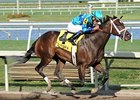 Live Lively