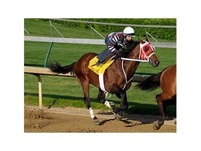 "Friesan Fire had a very quick five furlong work April 27 at http://gallery.pictopia.com/bloodhorse/gallery/81492/photo/8045146/?o=3"">Order This Photo"