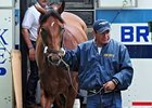 Big Brown arrives at Belmont on May 19 following a van ride from Pimlico.