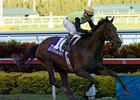 "Hal's Hope winner Chatain will try to extend his winning streak in the Richter Scale.<br><a target=""blank"" href=""http://www.bloodhorse.com/horse-racing/photo-store?ref=http%3A%2F%2Fpictopia.com%2Fperl%2Fgal%3Fprovider_id%3D368%26ptp_photo_id%3D3223856%26ref%3Dstory"">Order This Photo</a>"