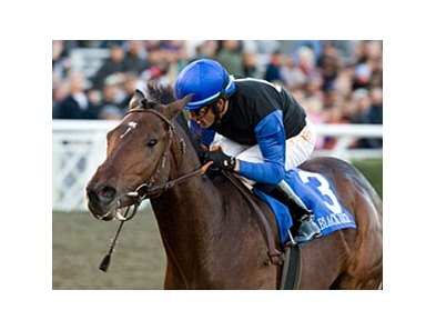 "Malibu Stakes winner Bob Black Jack is expected to be sidelined for several months.<br><a target=""blank"" href=""http://www.bloodhorse.com/horse-racing/photo-store?ref=http%3A%2F%2Fpictopia.com%2Fperl%2Fgal%3Fprovider_id%3D368%26ptp_photo_id%3D7224419%26ref%3Dstory"">Order This Photo</a>"