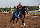 "Oxbow at Belmont Park<br><a target=""blank"" href=""http://photos.bloodhorse.com/TripleCrown/2013-Triple-Crown/Belmont-Stakes-145/29744699_jpqpwR#!i=2556962602&k=v4h7DDx"">Order This Photo</a>"