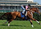 "Curlin works on the Churchill turf on July 1, 2008.<br><a target=""blank"" href=""http://www.bloodhorse.com/horse-racing/photo-store?ref=http%3A%2F%2Fpictopia.com%2Fperl%2Fgal%3Fprovider_id%3D368%26ptp_photo_id%3D4987766%26ref%3Dstory"">Order This Photo</a>"
