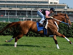 Curlin works on the Churchill turf on July 1, 2008.