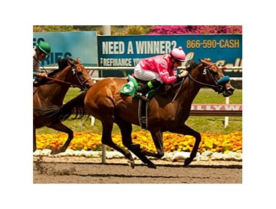 Ultra Blend