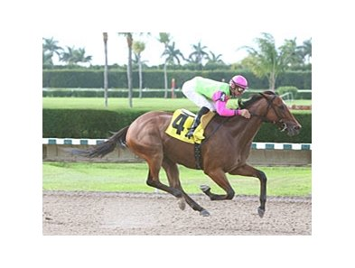 Mambo Meister cruised to a 7 3/4-length victory in the Memorial Day Handicap at Calder Race Course.